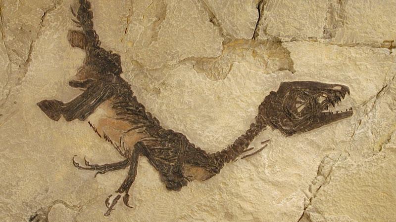 Sulle tracce dei fossili per scoprire il passato